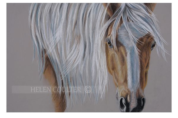 Helen Coulter Art | The Pony