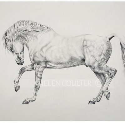 Lets Prance | Helen Coulter Art