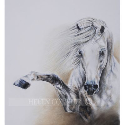 Helen Coulter Art | Talk To The Hoof