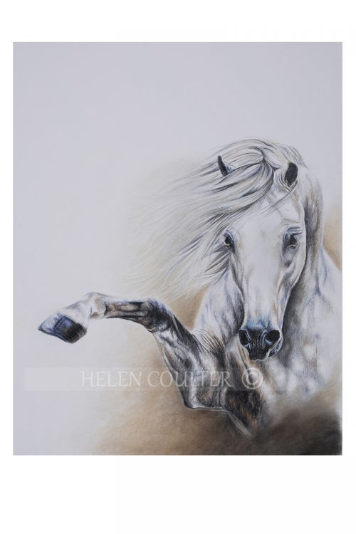 Talk To The Hoof | Helen Coulter Art