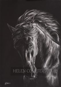 Black Knight | Helen Coulter Art