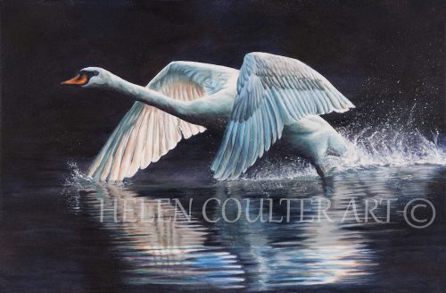Winging It | Helen Coulter Art