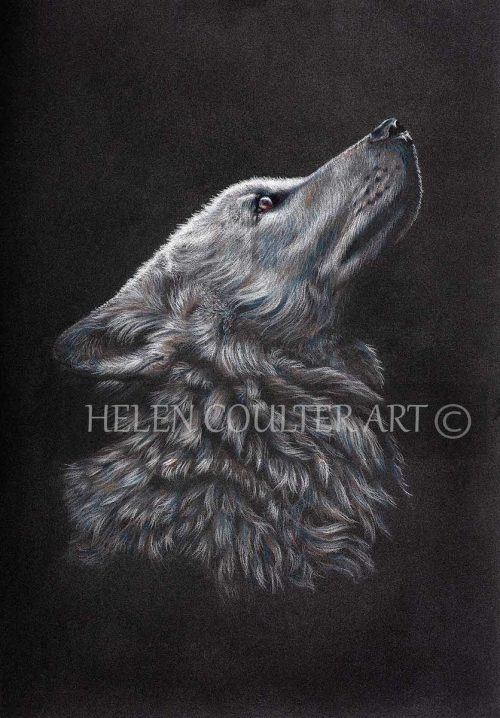 Wolfie | Helen Coulter Art