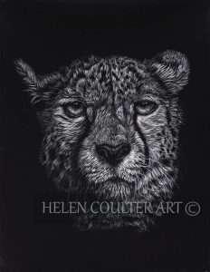 Cheeetah | Helen Coulter Art