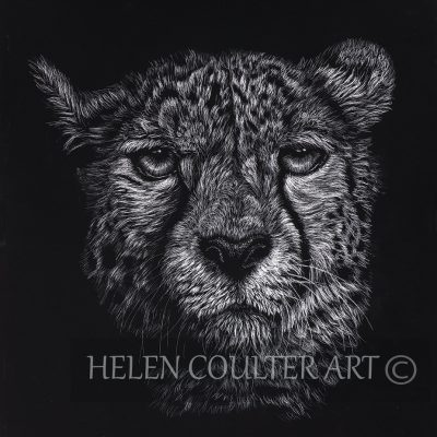 Cheeetah | Helen Coulter Art
