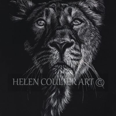 Lion | Helen Coulter Art