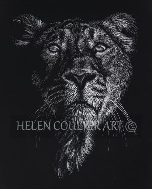 "Lion ""Pride"" 