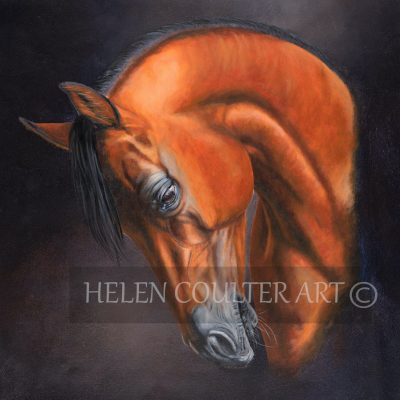 Arabian Lights | Helen Coulter Art