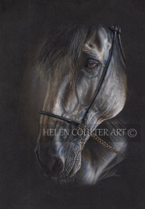 Out of the Shadows | Helen Coulter Art