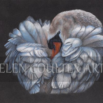 Ruffled | Helen Coulter Art
