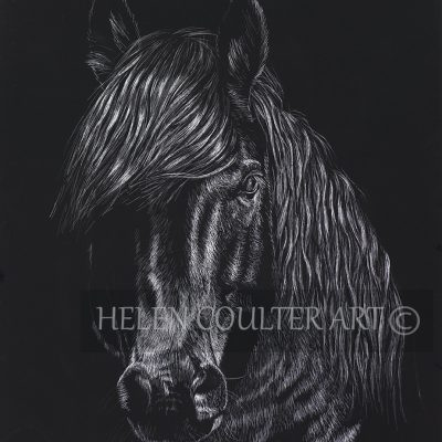 Wild and Free | Helen Coulter Art